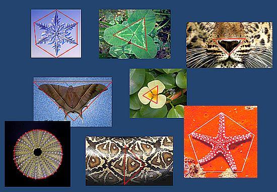 Geometria_che_passione_fig_15.jpg